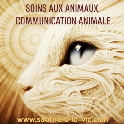 Communication Animale: Coeurly le chat